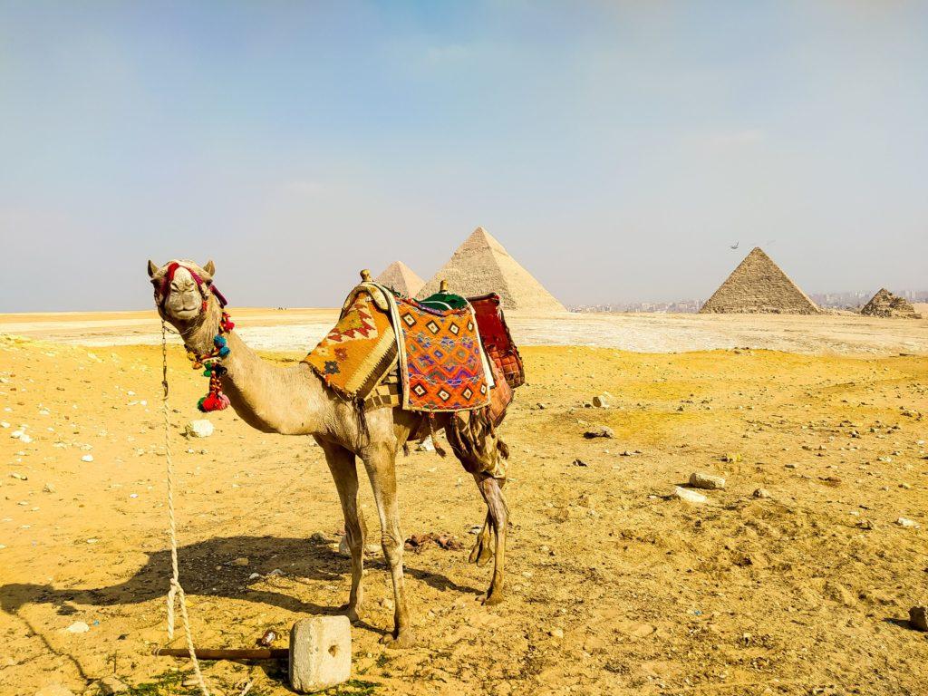 Пирамиды Гизы верблюд