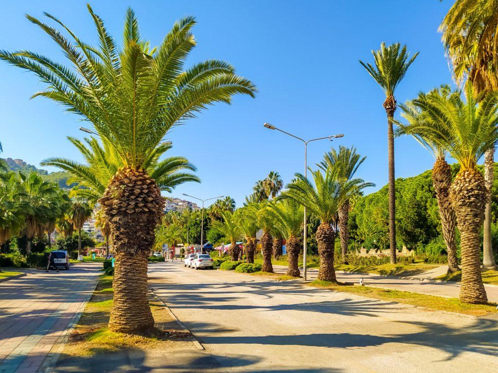 Алания пальмы