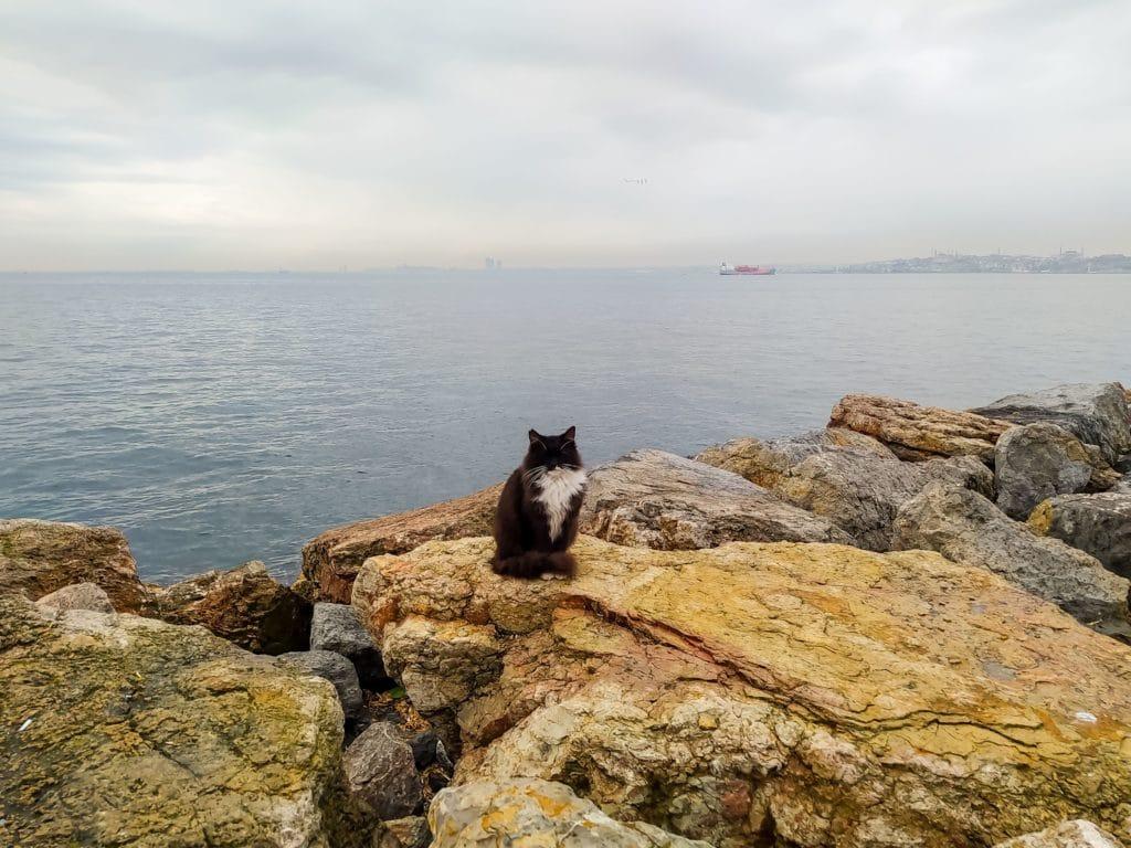 Стамбул коты