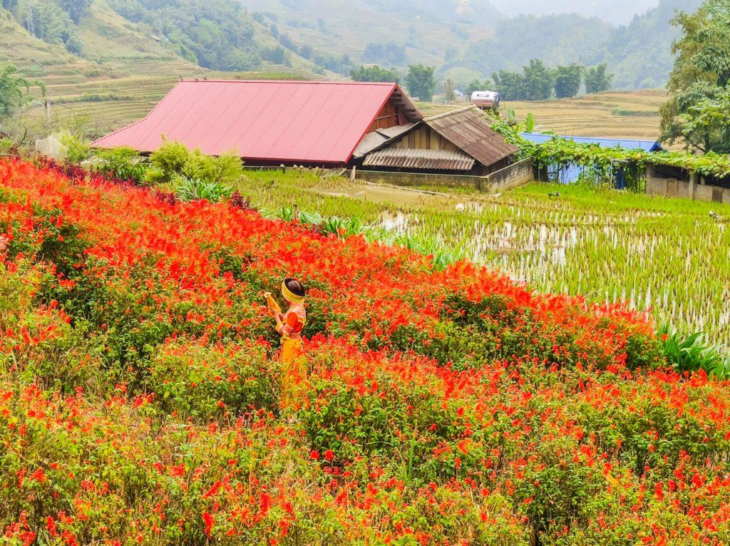 Вьетнам поле