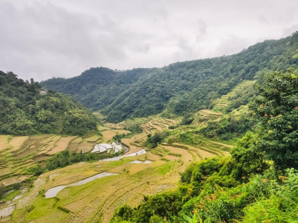Рисовые терассы в Банаю