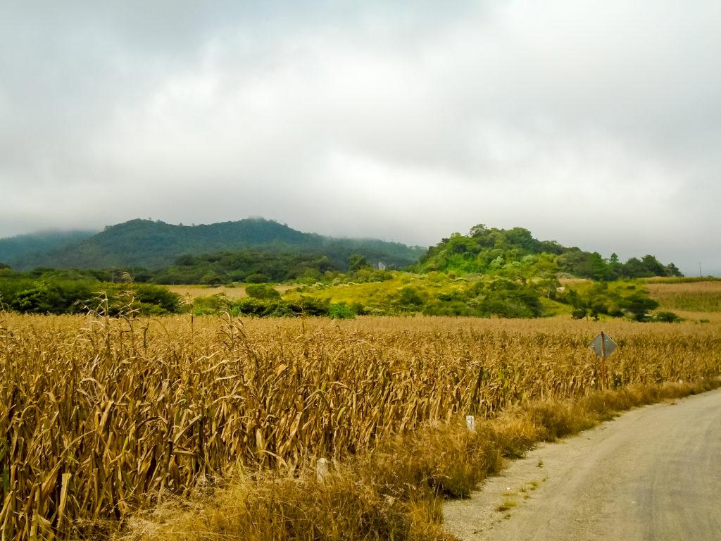 Чьяпас кукурузные поля