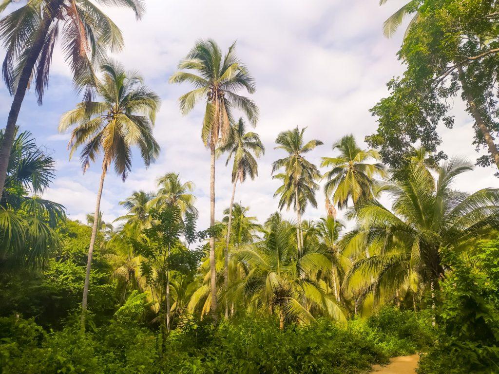 Парк Тайрона джунгли