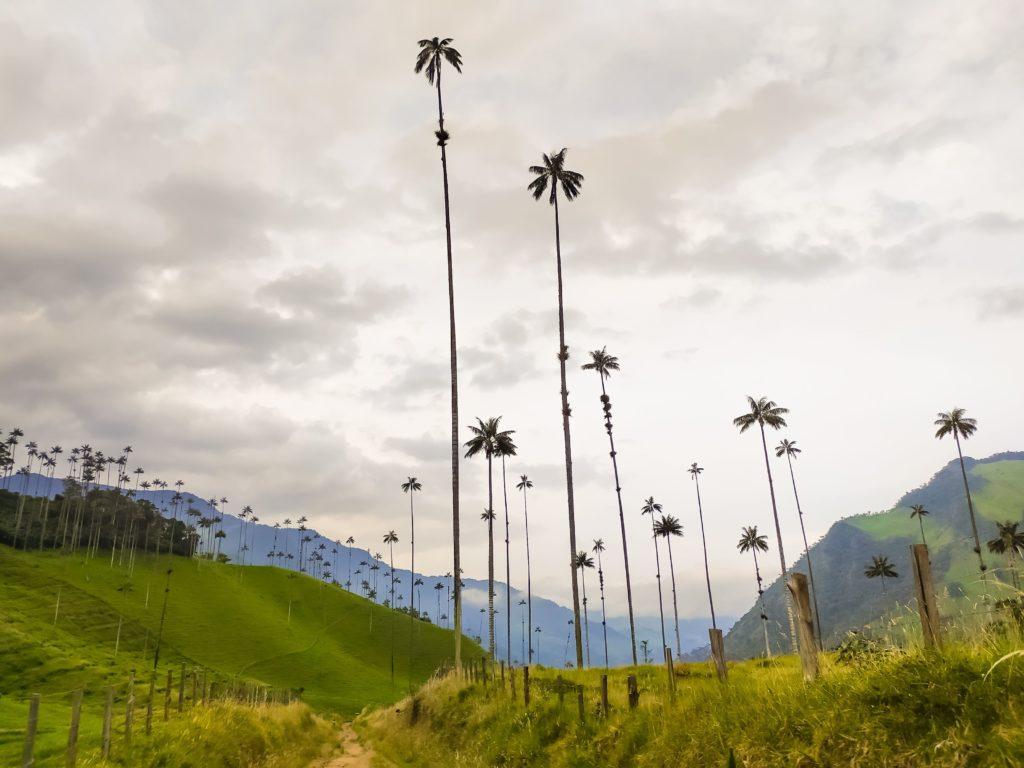 Долина Кокора пальмы по дороге