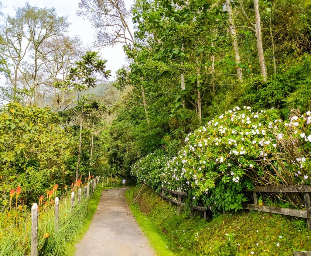 Долина Кокора ферма Ла Монтанья