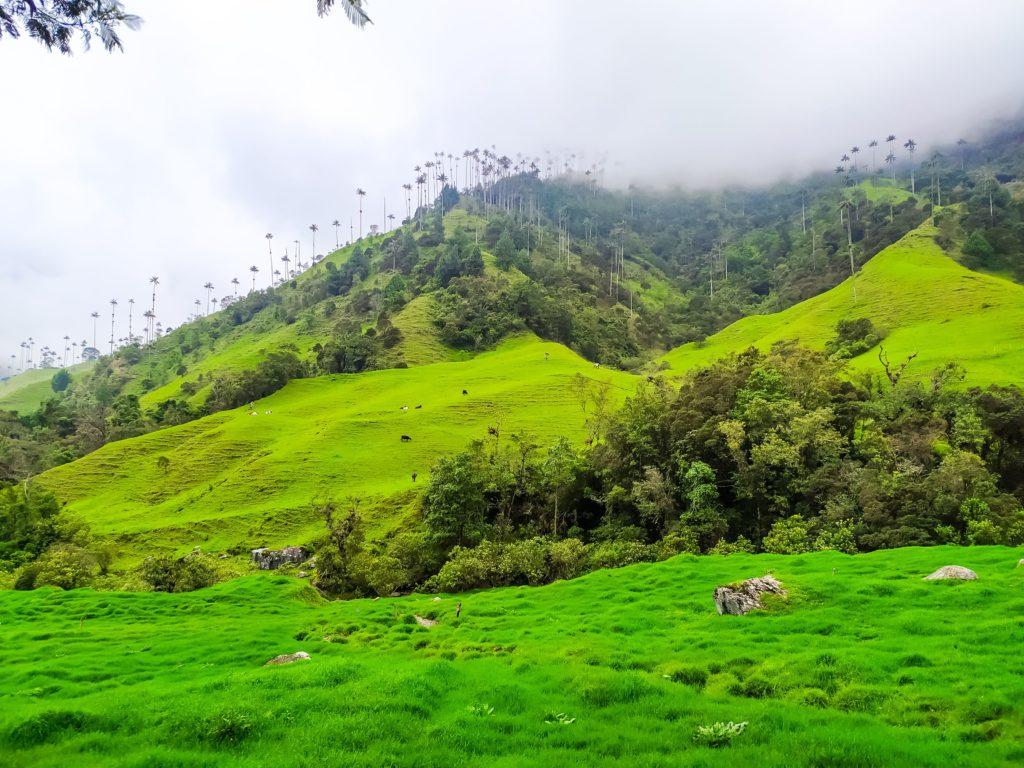 Долина Кокора 50 оттенков зелёного